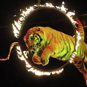Цирки Саратова